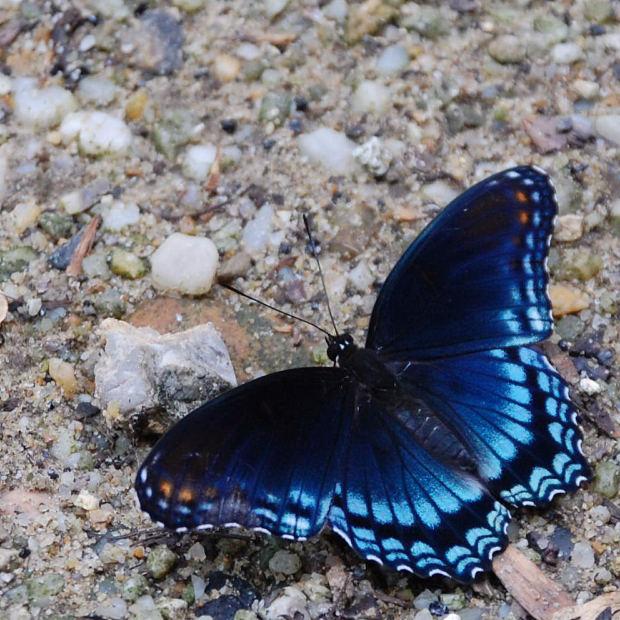 L'estate della farfalla